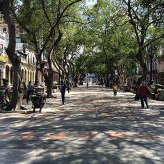 Paseo del prado.  #Cuba #Havana #havana_libre #habana by me_encanta_cuba