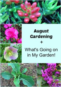 Now is the time to start planning the August gardening tasks that you need to do. Find out what you should be doing in the garden during August! 3 Ingredient Scones, Food Hacks, Food Tips, Food Poisoning, Early Spring, Budget Meals, Gardening Tips, Harvest, Breads