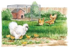 Raise Your Best Flock Using Broody Hens - Keep a broody hen to hatch, raise and protect your flock's new generations of chicks. Plus, learn which are the best broody chicken breeds.