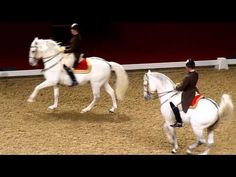 The Spanish Riding School of Vienna. We should all aspire to this, however humble our horse, however novice we are. Even if we are in the gutter, we could look up to the stars xkx Beautiful Horses, Animals Beautiful, Cute Animals, Spanish Riding School Vienna, Lipizzan, Show Horses, Race Horses, Horse Videos, Morgan Horse