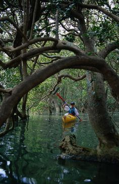 Kayak Tips Ideas Sea Kayaking through mangroves on Waitangi River. Kayak Fishing Tips, Kayak Camping, Canoe And Kayak, Camping List, Kayaking Outfit, Kayaking Tips, Kayaks, Mont Dore, Bay Of Islands