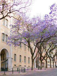 Jacaranda purple trees blooming in Lisbon, Portugal Purple Trees, Lisbon Portugal, Algarve, Engagements, Destination Wedding Photographer, Couple Photography, Travel Style, Bloom, Street