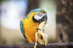 La guía para aves y la nutrición para aves de la Dra. Becker le ayudará a darle una alimentación completa a su mascota. http://mascotas.mercola.com/sitios/mascotas/archivo/2014/05/08/nutriticon-completa-para-aves.aspx