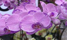 chinese new year flower Chinese New Year Flower, Chinese Flowers, Orchid Seeds, Thankful For Friends, Edible Wild Plants, Game Design, The Places Youll Go, Beautiful Images, Nature