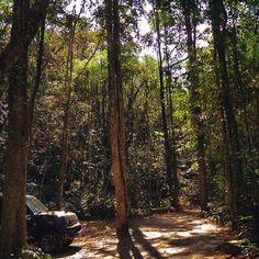 【iamianchun】さんのInstagramをピンしています。 《🚙 好想擁有一台吉普車 翻山越嶺的四處遊蕩 屬於大自然的探險家 屬於自己的旅途生活  #photography #photo #sunlight #forest #trees #jeep #car #natural #travel #traveler #mountains #trails #森林 #台灣 #自然》