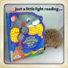 #hedgehog #hedgie #funny #lol #quills #reading #book #cute #adorable