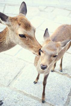 The Deer In Nara