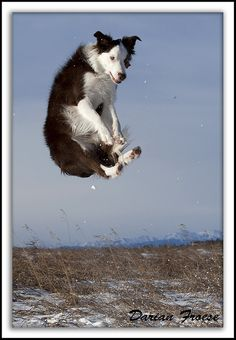 Hangtime! by Darian Froese, via Flickr