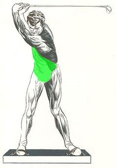 The abdominal muscles generate much of the torquing power in the body as well as transfer the power generated in the lower body up to the arms for the downswing.