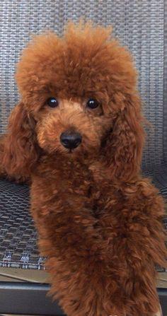 Such a cute little fur ball.