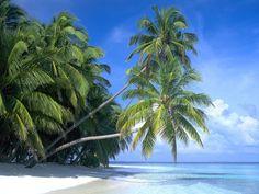 Palm Paradise Beach - Beach Travel - Palm Paradise Beach Beach Vacations   Travel Beach   The Maldives