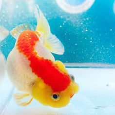 231 Best Fishes images in 2017 | Fish, Beautiful fish