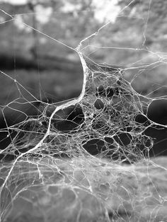 Image about spider web in :-) by Luciano Caci Spider Art, Spider Webs, Midsummer Nights Dream, Foto Art, Moustaches, Natural Forms, Texture, Installation Art, Fractals