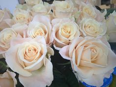 Sandy Femma rose from South America Light Pink Flowers, Cut Flowers, White Flowers, Wholesale Florist, Sky Design, Wonderful Flowers, Vintage Roses, Flower Decorations, Color Show