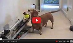 Dog Playing Ball With Machine