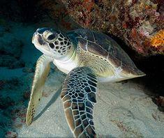 Beautiful Underwater Photos | Travel + Leisure