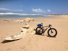 Fat Bike Tours Fat Bike, Safari, Tours, All Terrain Bike
