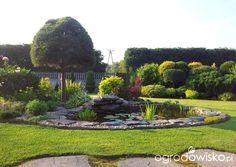 Moja codzienność - ogród Oli - Forum ogrodnicze - Ogrodowisko