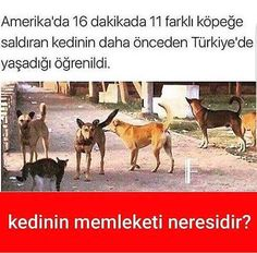 Kesin adanadır..... Pictures To Draw, Funny Pictures, Funy Memes, Ridiculous Pictures, Best Caps, Karma, Animal Jokes, Dark Fantasy Art, Funny Laugh