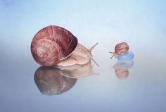 Snails ElenAndreeva