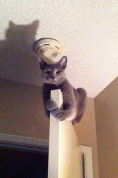 Süper kedi..