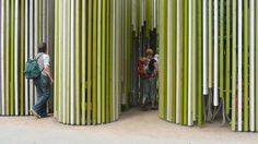 Rehwaldt Landscape Architecture scout tree