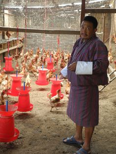 In early 2012, READ Bhutan partnered with two local villagers through the Rongthong READ Center to launch a for-profit business enterprise to generate an income to sustain the Center in the long run. Read more: http://readglobal.org/our-work/read-bhutan/stories-of-empowerment/sustaining-enterprises-poultry-co-op