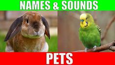 Learn Names of Pets for Kids - Pet Animal Names and Sounds for Children, Kindergarten and Preschool Funny Video Memes, Videos Funny, Funny Animal Videos, Funny Animals, Drawing Videos For Kids, Animal Print Outfits, Social Determinants Of Health, Training Motivation, Digital Strategy