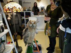 Oh, how awesome! In London, there's an owl bar that serves drinks, rescues injured owls, and raises funds for conservation. The proceeds go to the Barn Centre, a non-profit organization dedicated to the protection of owls in the UK. smile emoticon  More: http://www.awesomelycute.com/2015/02/london-opens-a-bar-where-you-can-pet-owls/