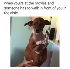 When You're At Movies And Someone Has To Walk In Front Of You In The Aisle funny lol funny quotes hilarious humor funny pictures funny images Funny Cute, The Funny, Freaking Hilarious, Seriously Funny, Animal Memes, Funny Animals, Animal Humor, Adorable Animals, Animal Captions