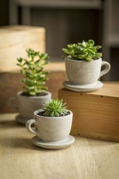 Concrete Planter Coffee Tea Cup with Saucer.  Perfect for succulents, wheat grass and more. 4 x 3.5 x 2.75.