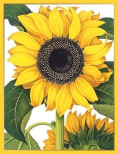Design Design Hand Drawn Sunflower Note Cards Design http://www.amazon.com/dp/B00I8OD322/ref=cm_sw_r_pi_dp_VmKWvb04XBBCW