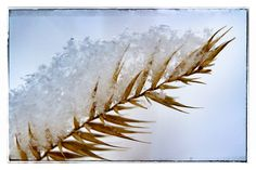 Grass and snow. Roller Coaster Ride, Macro Shots, Grass, Scenery, Snow, Abstract, Winter, Photography, Art