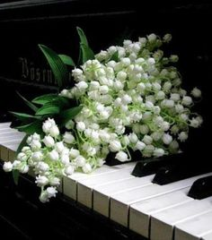 Lily of the valley flowers lying on top of piano keys My Flower, White Flowers, Flower Power, Beautiful Flowers, Lilies Flowers, White Peonies, Valley Flowers, Raindrops And Roses, Lily Of The Valley
