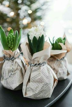 Excellent Photos Fleurs diy papier Populaire, Sweet gift idea ❤ Pack hyacinths quickly and easily with newspaper Looks totally beautiful and everyone will be very happy about this attention Wrapping flowers and giving them away Gifts DIY Hack Noel Christmas, Winter Christmas, Christmas Crafts, Christmas Decorations, Christmas Flowers, Christmas Ideas, Xmas, Magazine Deco, Old Sheet Music