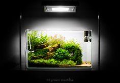 'Escarpment' Nature Aquarium by James Findley – Aquascape Art Planted Aquarium, Nano Aquarium, Aquarium Design, Aquarium Fish, Aquarium Ideas, Aquarium Landscape, Nature Aquarium, Aquascaping, Fish Garden