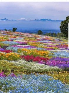 Clanwilliam distrik  ..John French Amazing Flowers, Pretty Flowers, Ciel Rose, Nail Studio, Amazing Nature, Planting Flowers, Natural Beauty, Around The Worlds, Photo And Video
