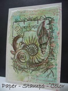 Katzelkraft groenterra symphonie collage  (2)