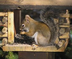 and there will be squirrels in little log cabin squirrel feeders all over the yard Animals And Pets, Cute Animals, Log Cabin Living, Ground Squirrel, Animal 2, Forest Friends, All Gods Creatures, Cozy Cabin, Chipmunks