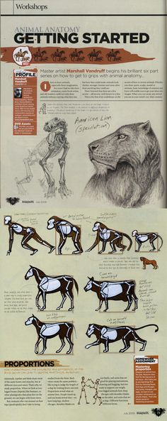 Animal Anatomy Workshop - click through to see the rest
