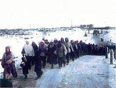 1943. Сталинград, колонна немецких военнопленных на краю города
