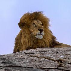 Viajar al Serengueti es uno de los mayores placeres de la vida