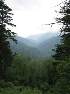 Amazing views can be found everywhere in the Smokies!