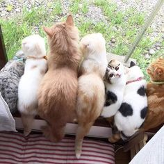The blond one looks like my kitty from the back, but he's fatter.