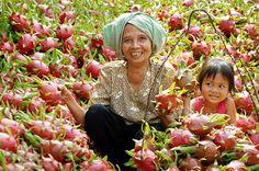 Vietnam   Được mùa