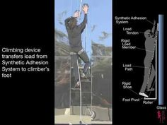 Geckos inspire scientists in US military-developed Spider-Man suit project...