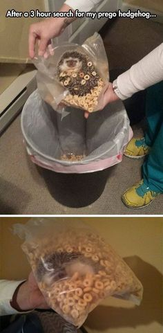 More and More Pin: The Absolutely best pinterest humor photo!