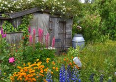 Without even trying, this delapidated shed and the rainwater butt have become a charming focal point in this allotment garden.