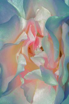 Xuebing Du's Surrealist Floral Fantasy – Trendland Online Magazine Curating the Web since 2006 Calla, Renaissance Paintings, Soothing Colors, Flower Aesthetic, Pics Art, Pretty Pictures, Art Inspo, Artsy, Texture