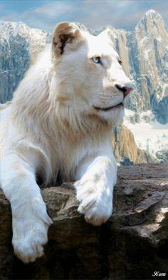 Tigre Branco Majestoso